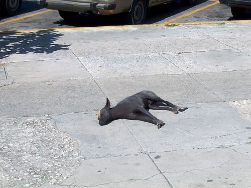 perro_cubano